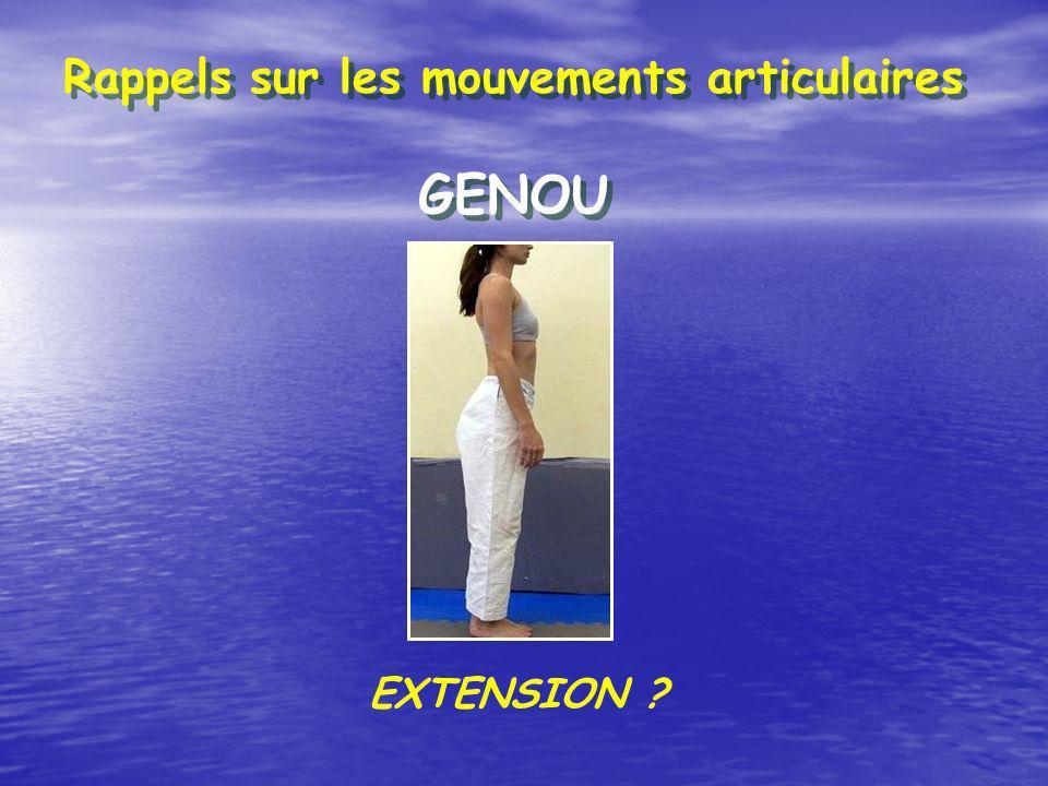 Rappels sur les mouvements articulaires GENOU EXTENSION ?