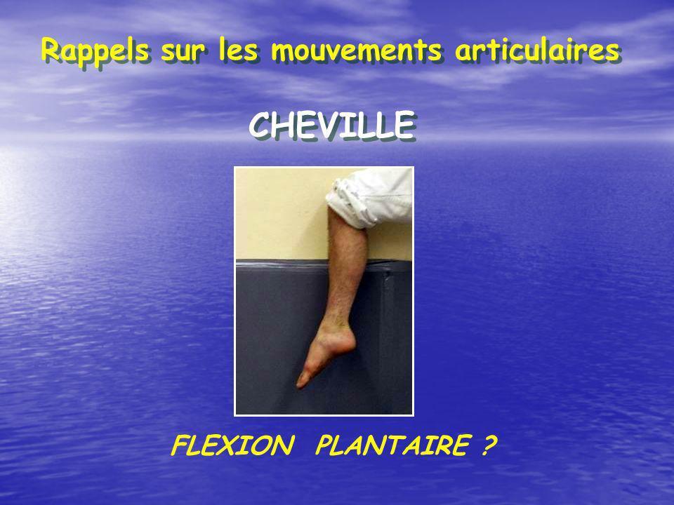 Rappels sur les mouvements articulaires CHEVILLE FLEXION PLANTAIRE ?
