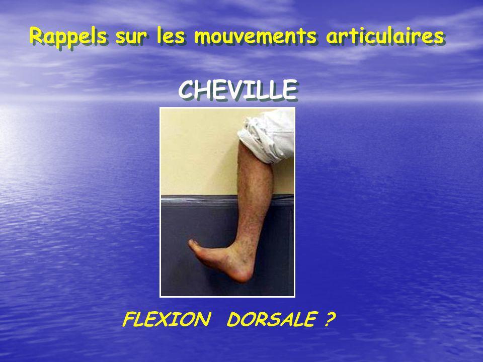 Rappels sur les mouvements articulaires CHEVILLE FLEXION DORSALE ?