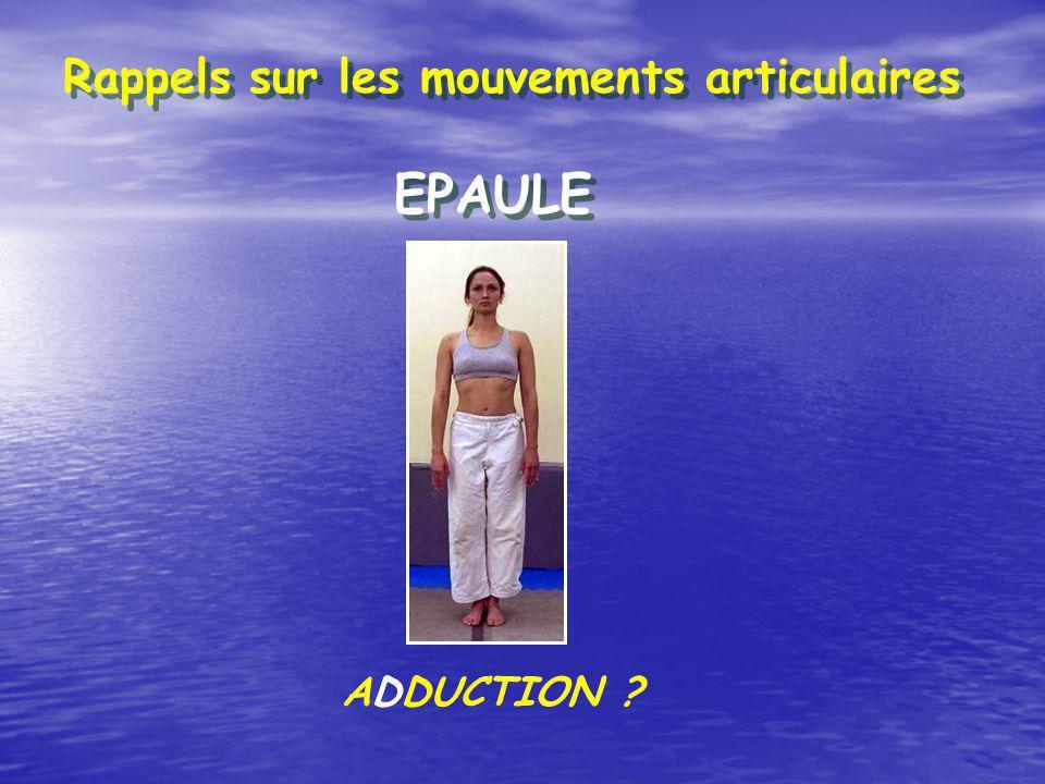 Rappels sur les mouvements articulaires EPAULE ADDUCTION ?