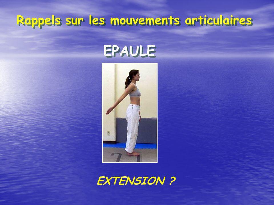 Rappels sur les mouvements articulaires EPAULE ROTATION EXTERNE ?