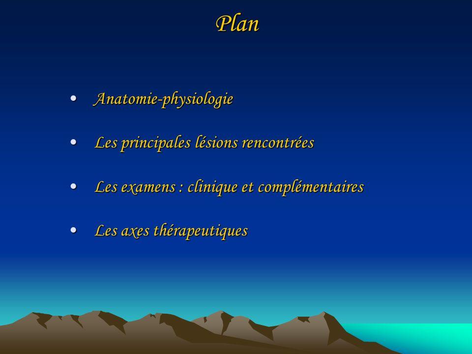 Plan Anatomie-physiologieAnatomie-physiologie Les principales lésions rencontréesLes principales lésions rencontrées Les examens : clinique et complém