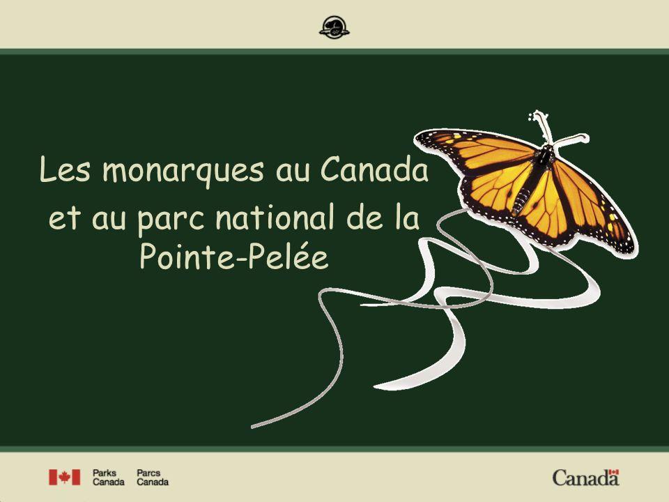 Piéride du chou (Pieris rapae) Vice-roi (Limenitis archippus) Amiral (Limenitis arthemis ) Les papillons diurnes au Canada Environ 300 espèces de papillons diurnes vivent au Canada Morio (Nymphalis antiopa) Photos : Parcs Canada