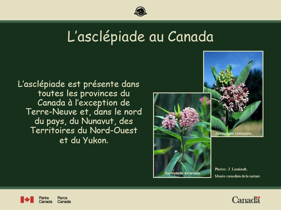 Répartition de lasclépiade au Canada Lasclépiade se rencontre principalement dans le sud du Canada.