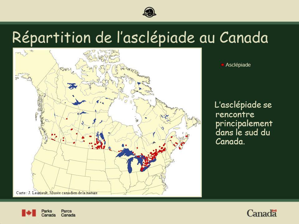 Des chenilles sélectives À léchelle mondiale, le monarque se nourrit exclusivement dasclépiade à létat larvaire.