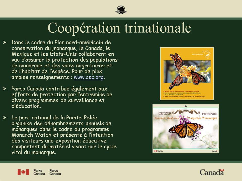 Pour de plus amples renseignements sur la migration du monarque au parc national de la Pointe-Pelée, visitez notre site Web à www.pc.gc.ca/pointpelee Photos : Parcs Canada