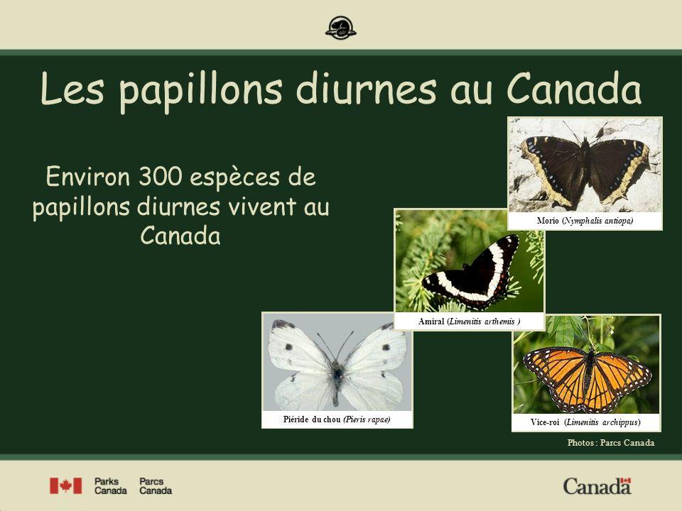 Espèces en péril au Canada Au Canada, 28 espèces de papillons diurnes ont été désignées « en péril » par le Comité sur la situation des espèces en péril au Canada.