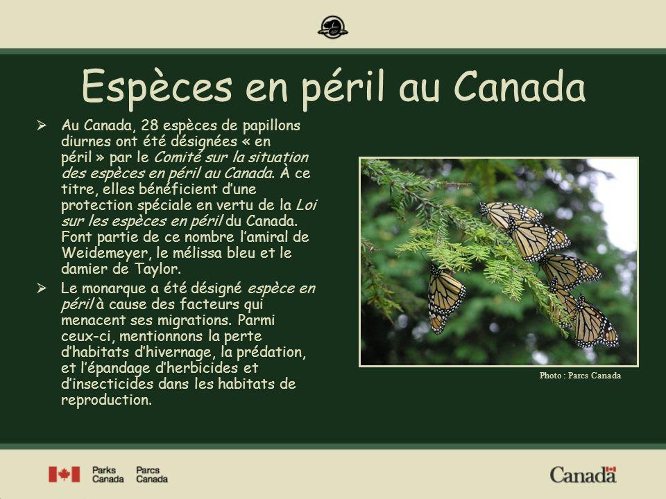Le monarque est le papillon diurne connu du plus grand nombre de gens.