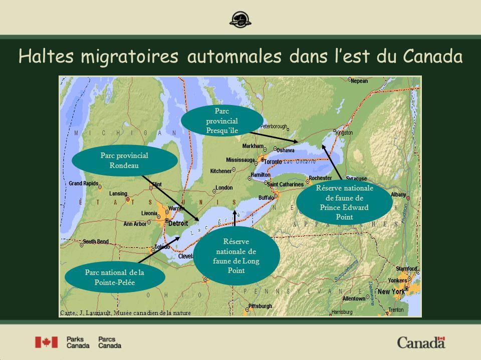 La Pointe-Pelée, un entonnoir migratoire Image : Parcs Canada