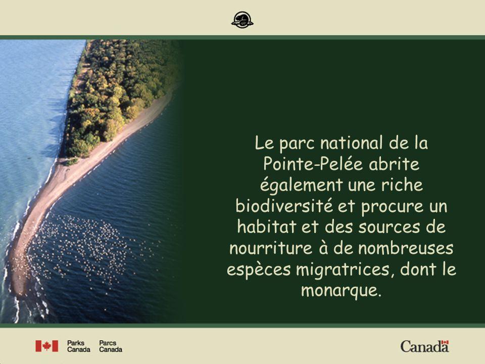 Lasclépiade au Canada Lasclépiade est présente dans toutes les provinces du Canada à lexception de Terre-Neuve et, dans le nord du pays, du Nunavut, des Territoires du Nord-Ouest et du Yukon.