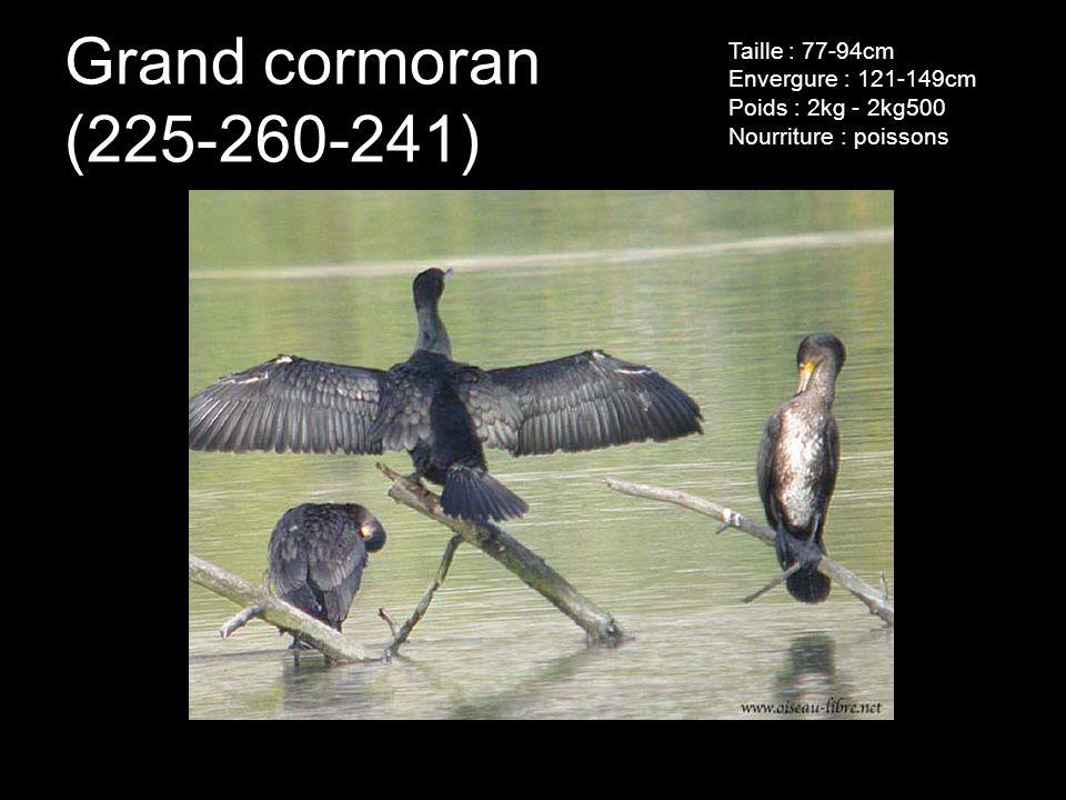 Grand cormoran (225-260-241) Taille : 77-94cm Envergure : 121-149cm Poids : 2kg - 2kg500 Nourriture : poissons