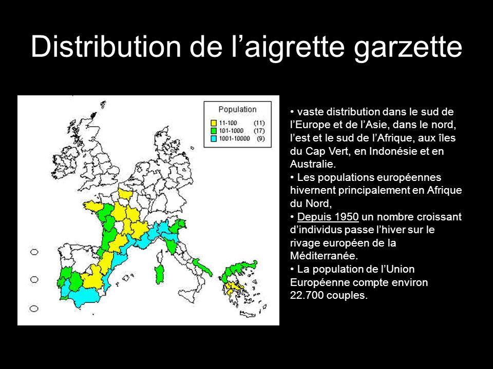 Distribution de laigrette garzette oo vaste distribution dans le sud de lEurope et de lAsie, dans le nord, lest et le sud de lAfrique, aux îles du Cap