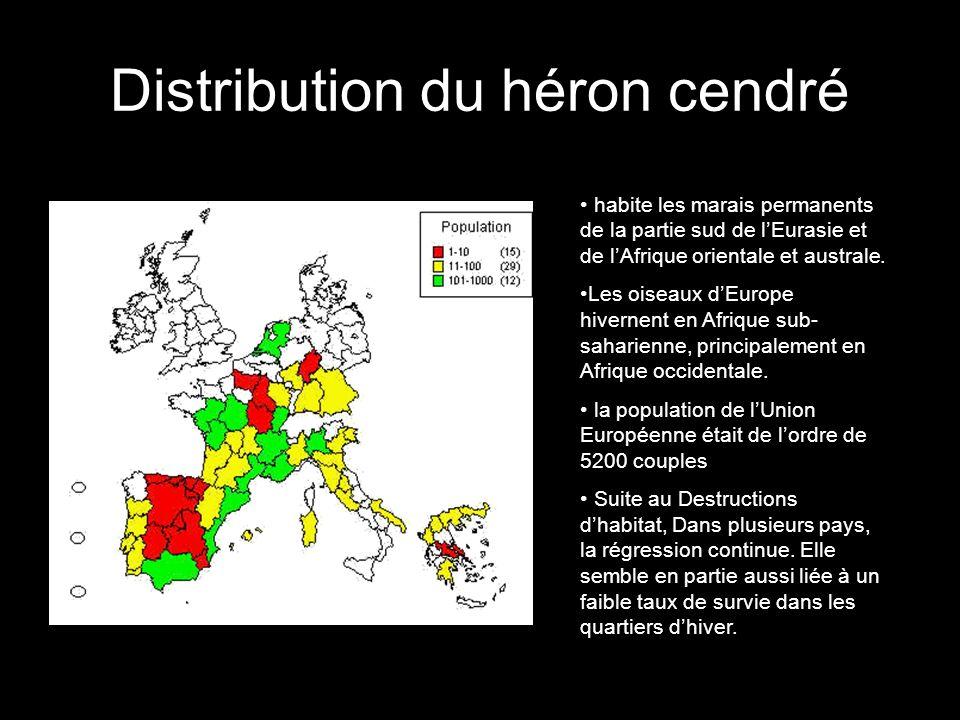 Distribution du héron cendré habite les marais permanents de la partie sud de lEurasie et de lAfrique orientale et australe. Les oiseaux dEurope hiver
