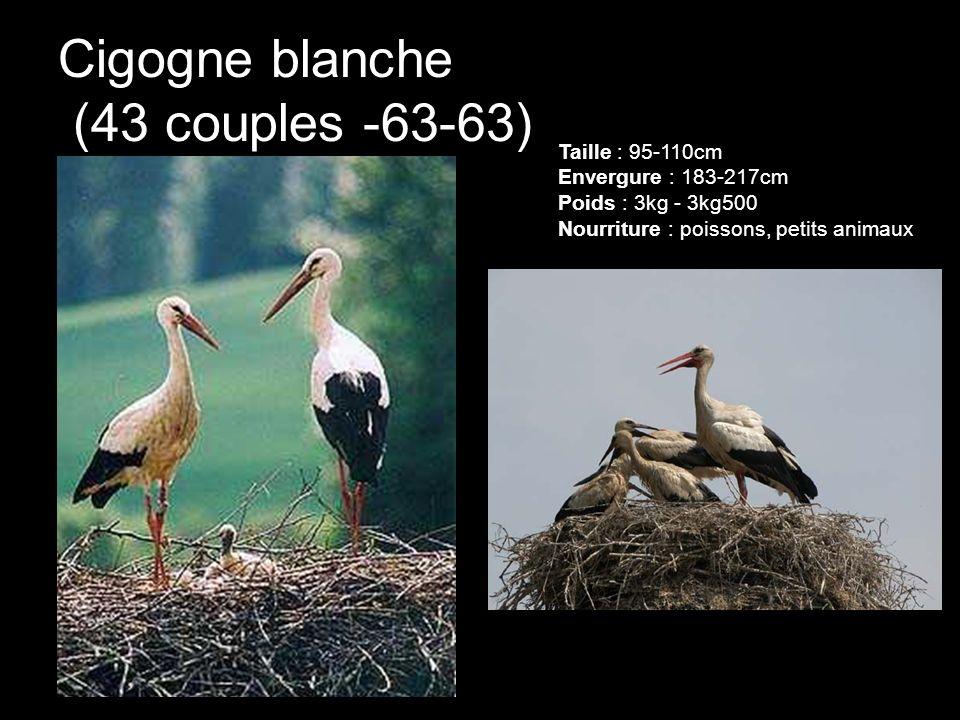 Cigogne blanche (43 couples -63-63) Taille : 95-110cm Envergure : 183-217cm Poids : 3kg - 3kg500 Nourriture : poissons, petits animaux