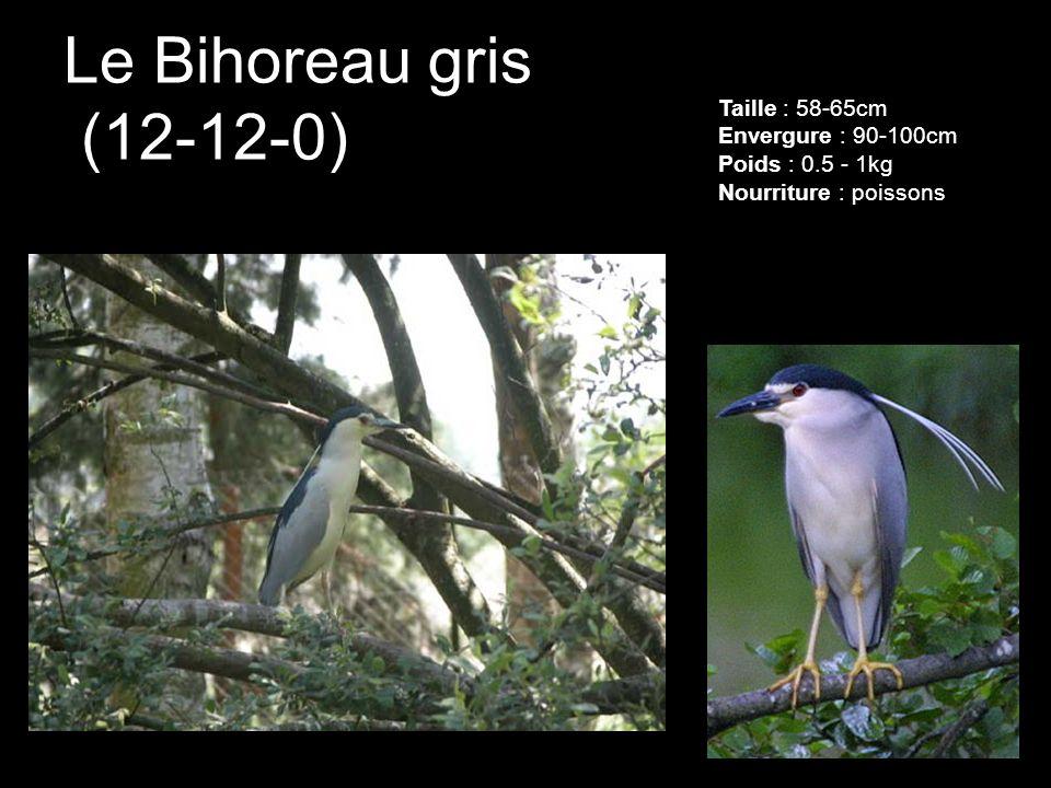 Le Bihoreau gris (12-12-0) Taille : 58-65cm Envergure : 90-100cm Poids : 0.5 - 1kg Nourriture : poissons