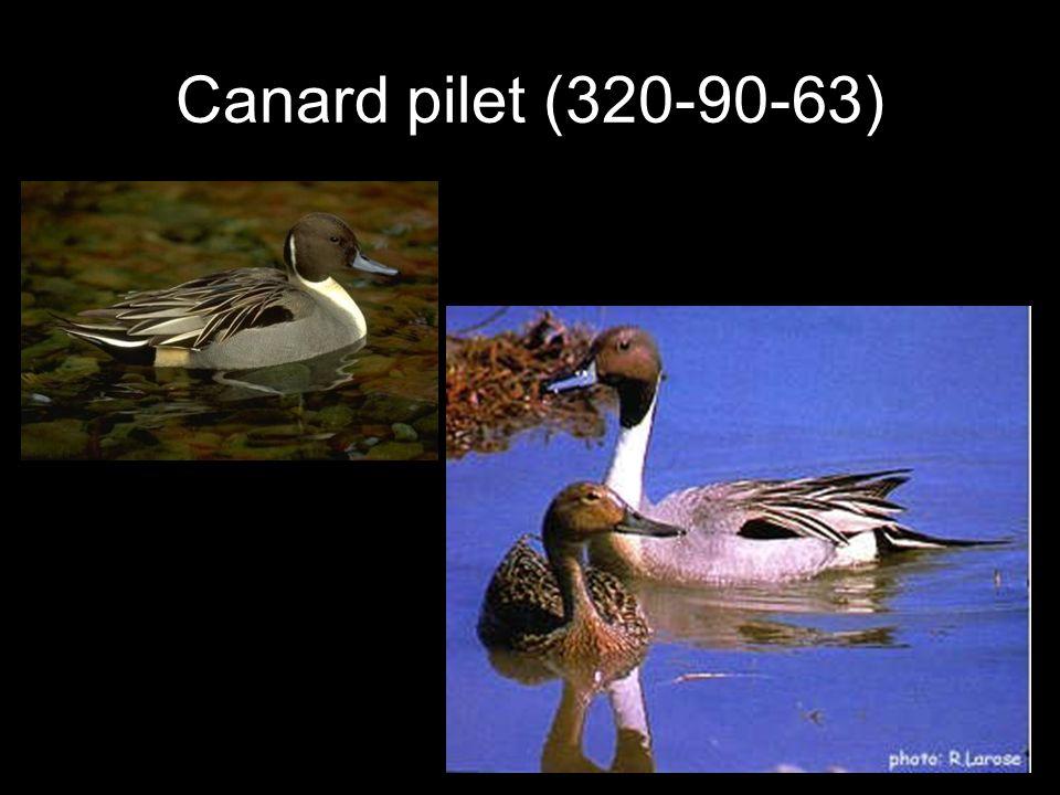 Canard pilet (320-90-63)