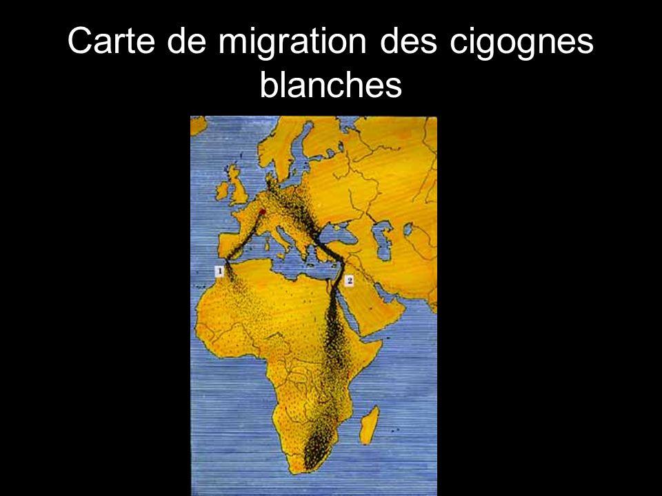 Carte de migration des cigognes blanches