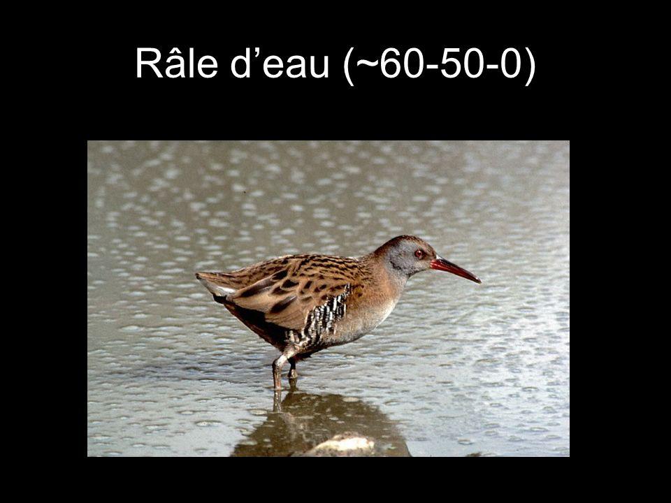 Râle deau (~60-50-0)