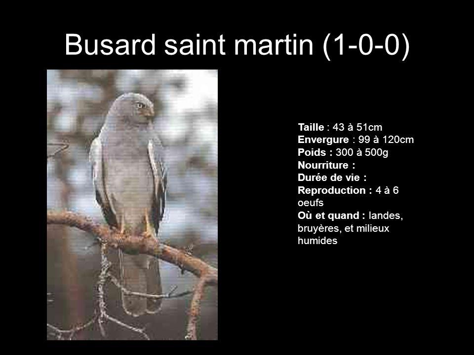 Busard saint martin (1-0-0) Taille : 43 à 51cm Envergure : 99 à 120cm Poids : 300 à 500g Nourriture : Durée de vie : Reproduction : 4 à 6 oeufs Où et