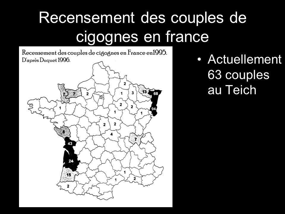 Recensement des couples de cigognes en france Actuellement 63 couples au Teich