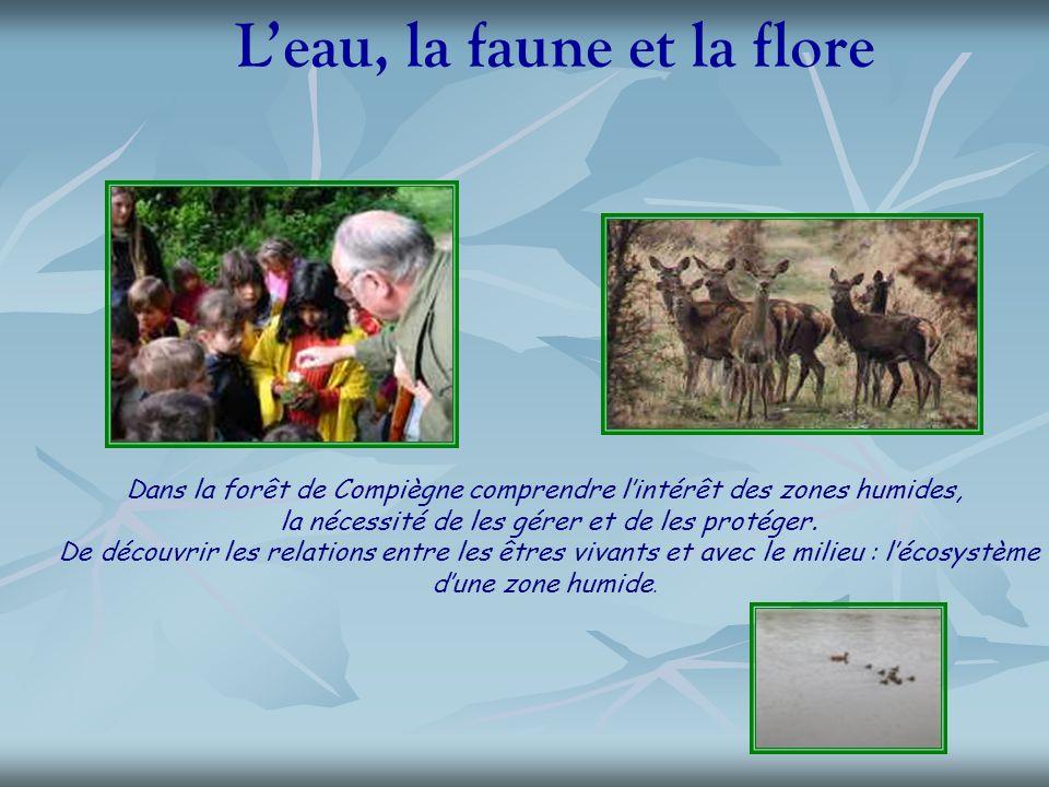 Leau, la faune et la flore Dans la forêt de Compiègne comprendre lintérêt des zones humides, la nécessité de les gérer et de les protéger. De découvri