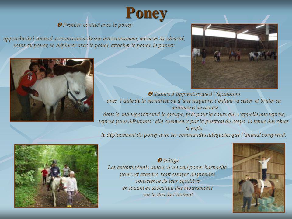 Poney Premier contact avec le poney approche de lanimal, connaissance de son environnement, mesures de sécurité, soins au poney, se déplacer avec le p