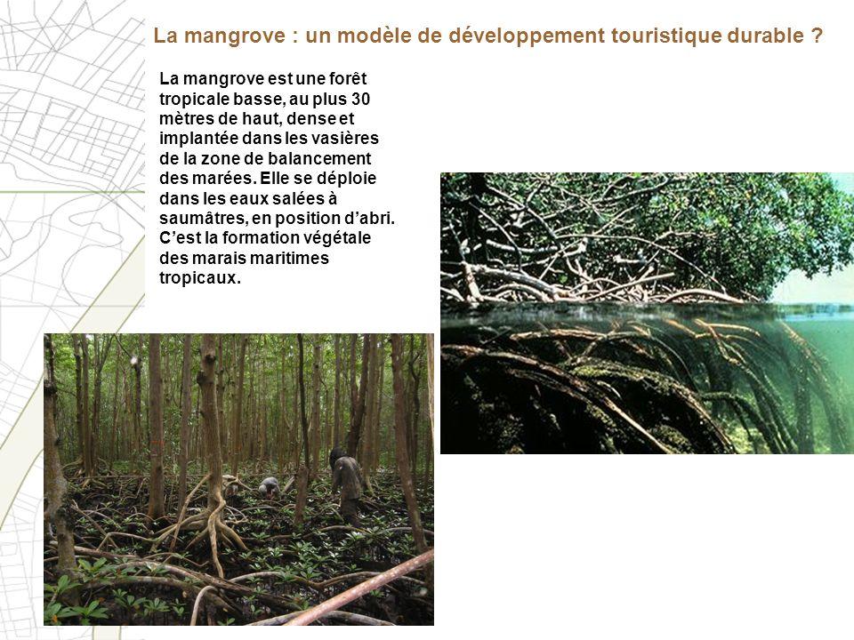 La mangrove est une forêt tropicale basse, au plus 30 mètres de haut, dense et implantée dans les vasières de la zone de balancement des marées. Elle