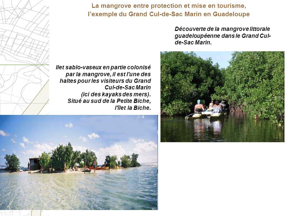 Découverte de la mangrove littorale guadeloupéenne dans le Grand Cul- de-Sac Marin. Ilet sablo-vaseux en partie colonisé par la mangrove, il est l'une