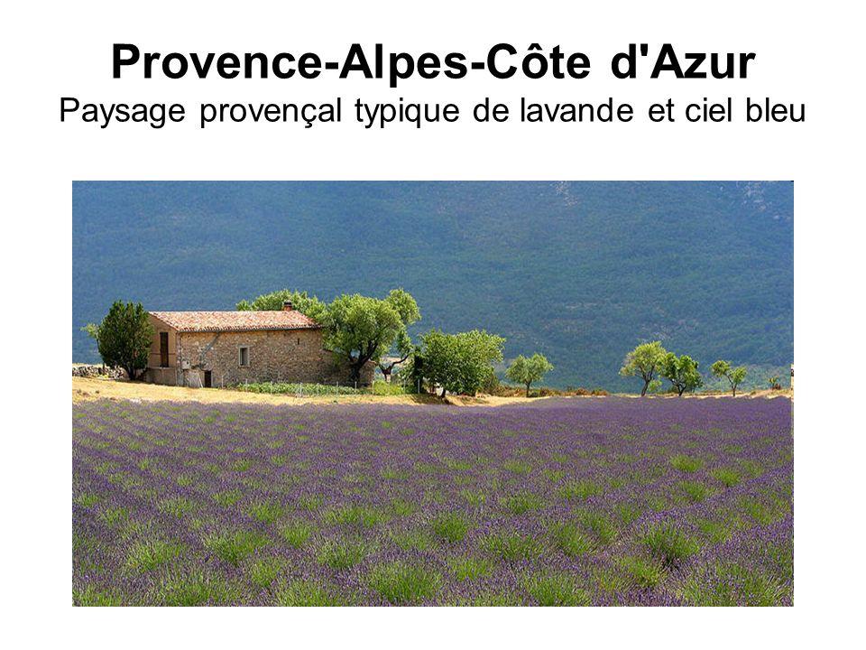 Provence-Alpes-Côte d'Azur Paysage provençal typique de lavande et ciel bleu