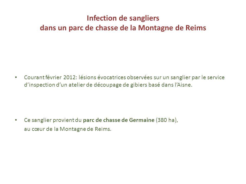 Infection de sangliers dans un parc de chasse de la Montagne de Reims Courant février 2012: lésions évocatrices observées sur un sanglier par le servi