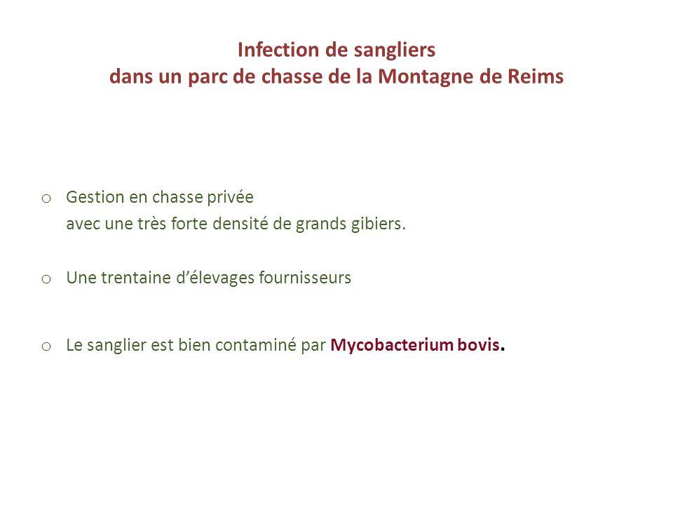 Infection de sangliers dans un parc de chasse de la Montagne de Reims o Gestion en chasse privée avec une très forte densité de grands gibiers. o Une