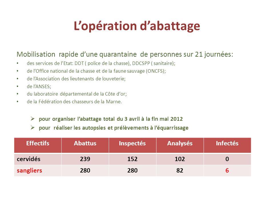 Lopération dabattage Mobilisation rapide dune quarantaine de personnes sur 21 journées: des services de lEtat: DDT ( police de la chasse), DDCSPP ( sa
