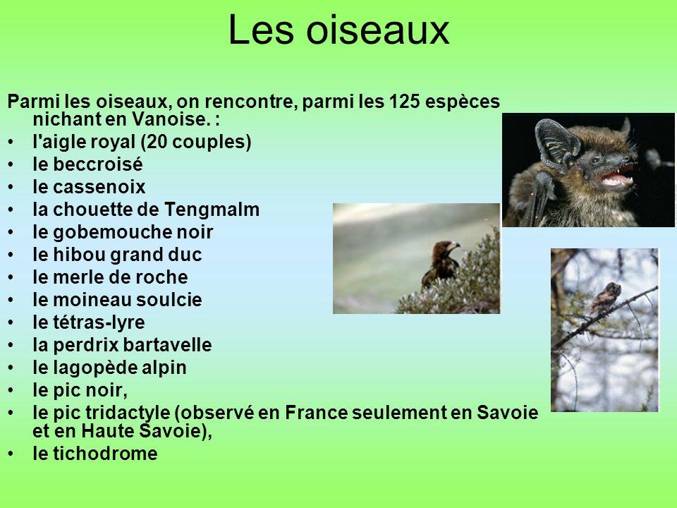 Les oiseaux Parmi les oiseaux, on rencontre, parmi les 125 espèces nichant en Vanoise.