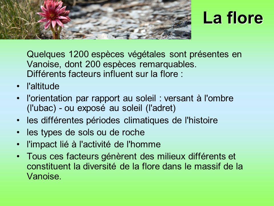 La flore Quelques 1200 espèces végétales sont présentes en Vanoise, dont 200 espèces remarquables.