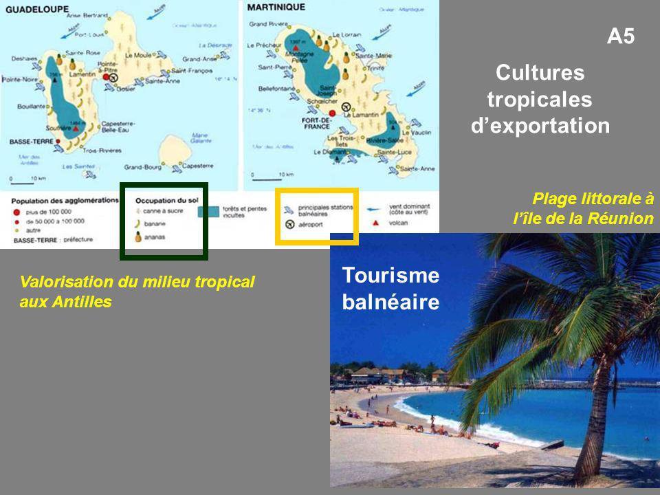 Plage littorale à lîle de la Réunion Valorisation du milieu tropical aux Antilles Cultures tropicales dexportation Tourisme balnéaire A5