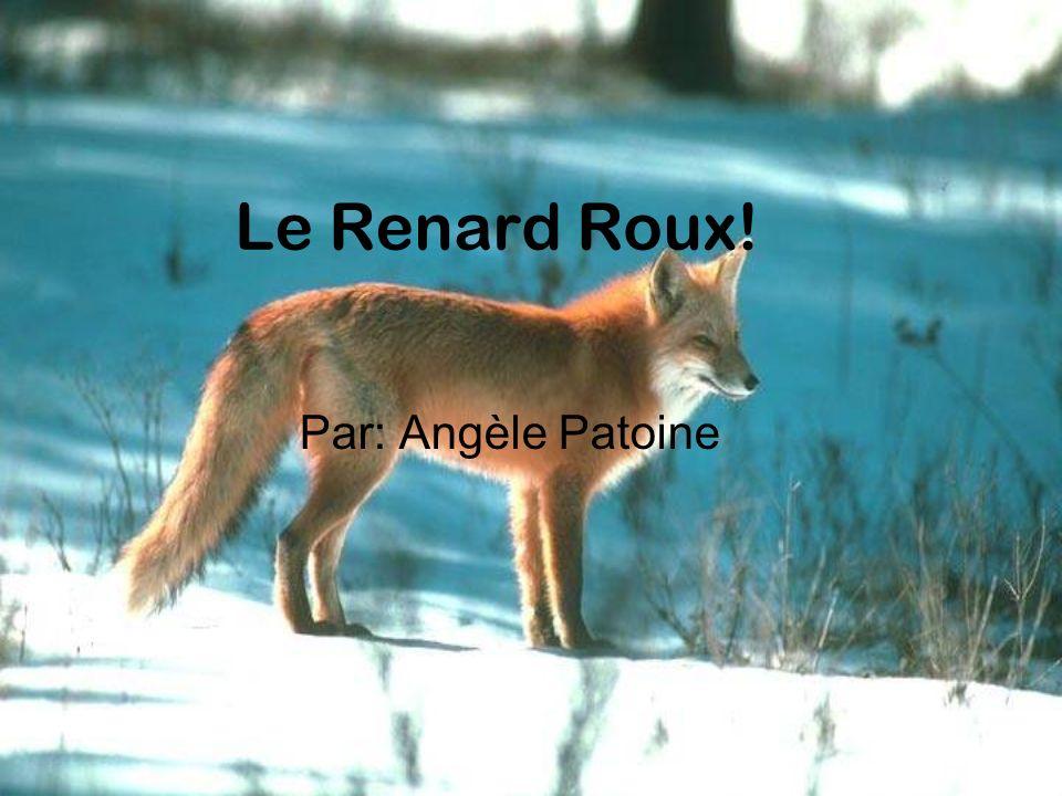Le Renard Roux! Par: Angèle Patoine