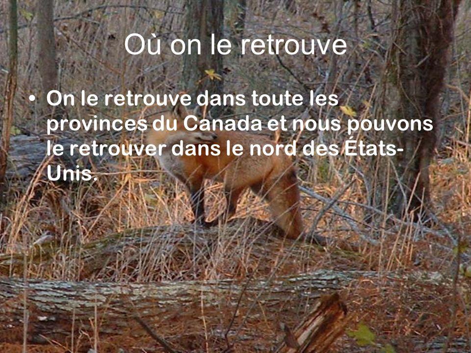 Où on le retrouve On le retrouve dans toute les provinces du Canada et nous pouvons le retrouver dans le nord des États- Unis.