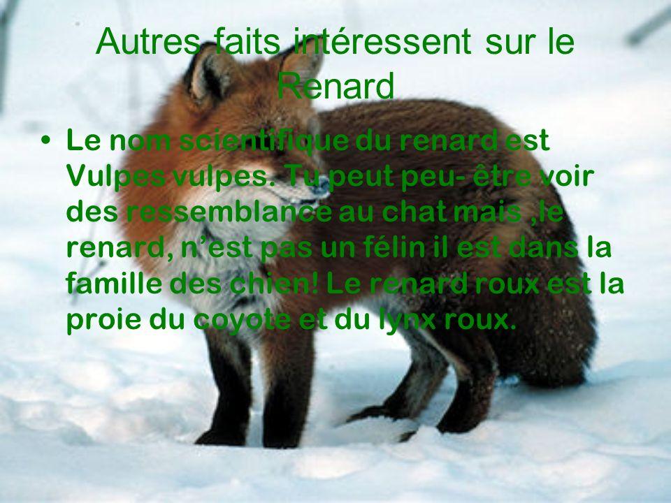 Autres faits intéressent sur le Renard Le nom scientifique du renard est Vulpes vulpes. Tu peut peu- être voir des ressemblance au chat mais,le renard