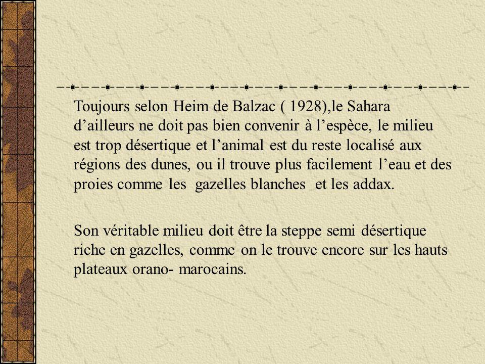 Toujours selon Heim de Balzac ( 1928),le Sahara dailleurs ne doit pas bien convenir à lespèce, le milieu est trop désertique et lanimal est du reste l
