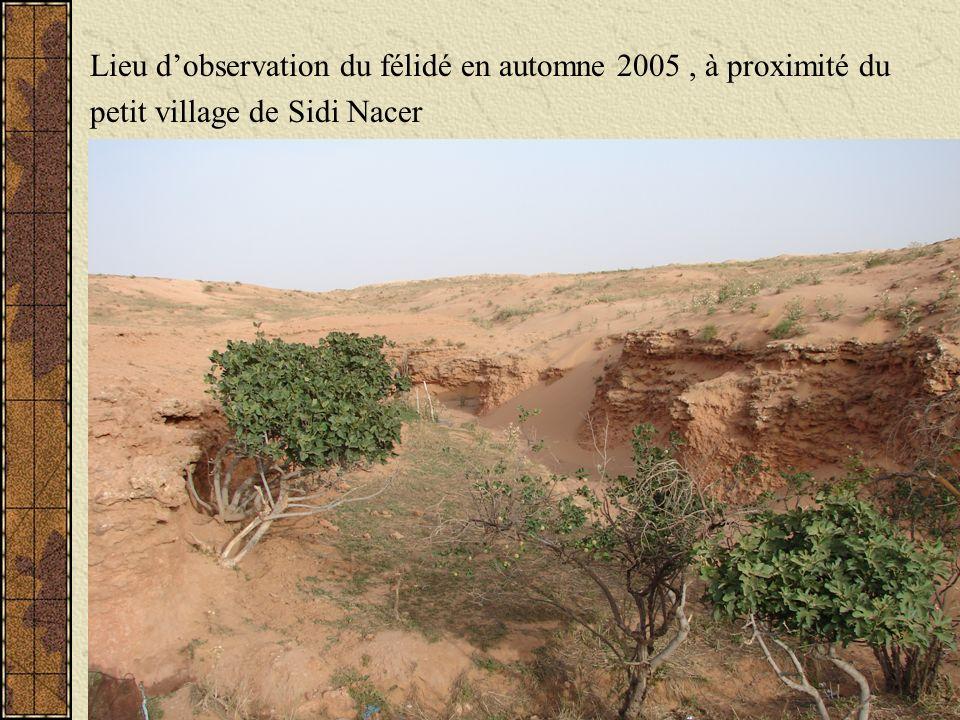 Lieu dobservation du félidé en automne 2005, à proximité du petit village de Sidi Nacer