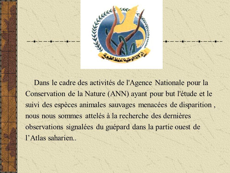 -Sebdou,il est mentionné que des dépouilles provenaient de la région frontalière avec le Maroc.(Loche, 1867) -El Golea, sa présence a été signalée par Dybowski, 1893 in Kowalski & Kowalska,1991 -Figuig -Beni Ounif,une douzaine de guépards capturés signalé par Strohl,1923 in Aulagnier & Thevenot,1986 -Sud de Boussada,sa présence est signalée en 1927 ( Joleaud, 1927) -Ain Sefra –Figuig,06 guépards capturés en 1927( Heim de Balzac, 1928) -Oued Namous,un guépard a été tué en 1927(Heim de Balzac,1928), -Monts de lOugarta, la présence du guépard selon Seurat, 1943, in Kowalski & Kowalska,1991.