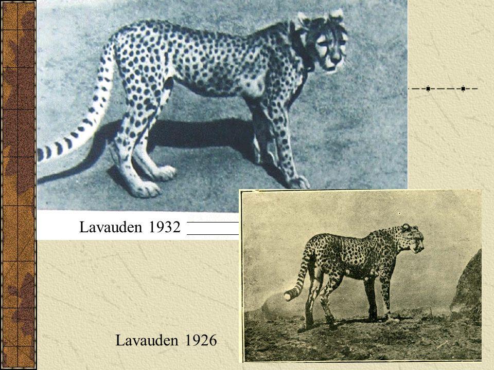 Lavauden 1932 Lavauden 1926 Lavauden 1932