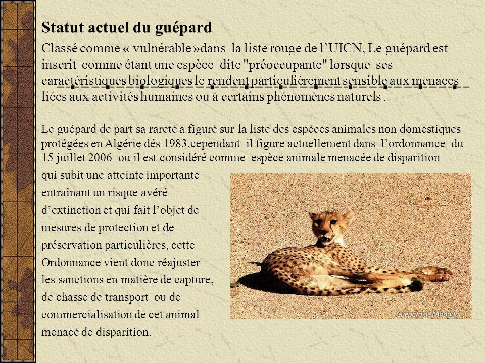 Statut actuel du guépard Classé comme « vulnérable »dans la liste rouge de lUICN, Le guépard est inscrit comme étant une espèce dite
