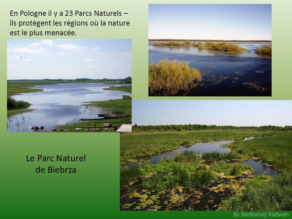 By Bartlomiej Radwan En Pologne il y a 23 Parcs Naturels – ils protègent les régions où la nature est le plus menacée. Le Parc Naturel de Biebrza