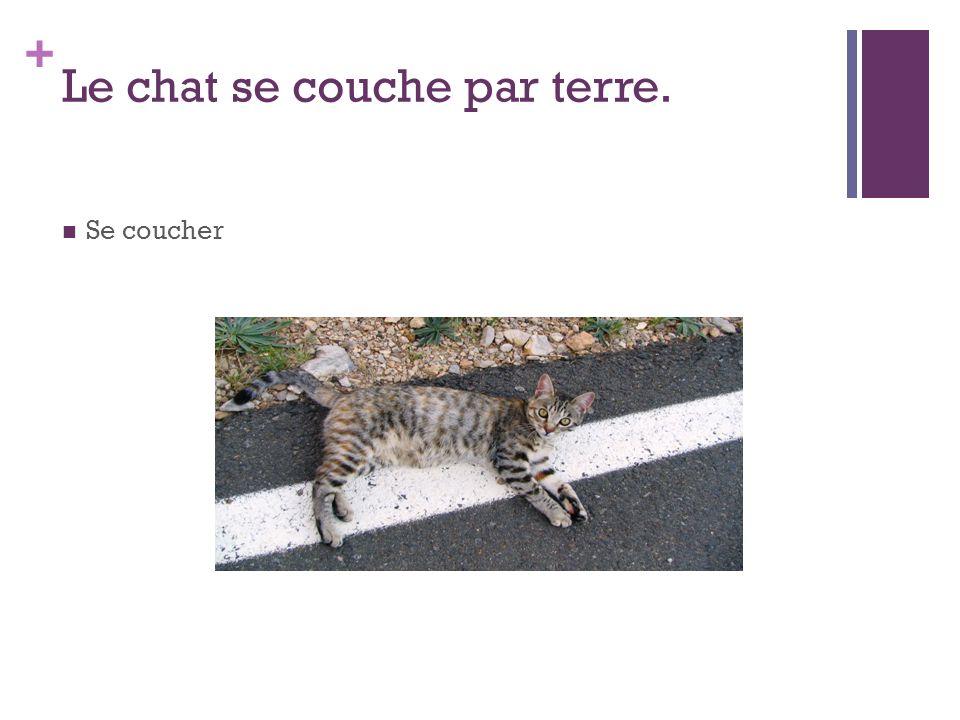 + Le chat se couche par terre. Se coucher