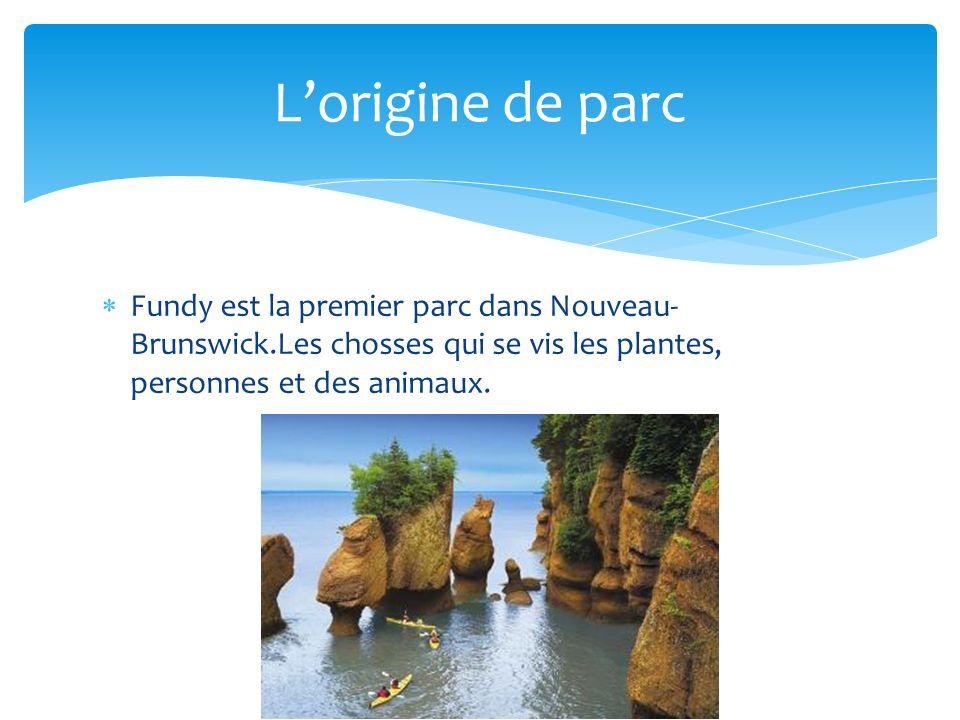 Fundy est la premier parc dans Nouveau- Brunswick.Les chosses qui se vis les plantes, personnes et des animaux.