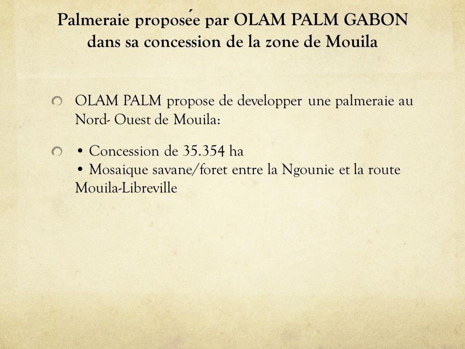 Palmeraie proposee par OLAM PALM GABON dans sa concession de la zone de Mouila OLAM PALM propose de developper une palmeraie au Nord- Ouest de Mouila: