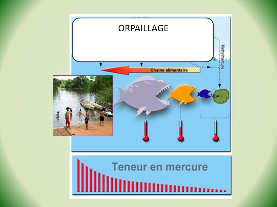 Algues ORPAILLAGE
