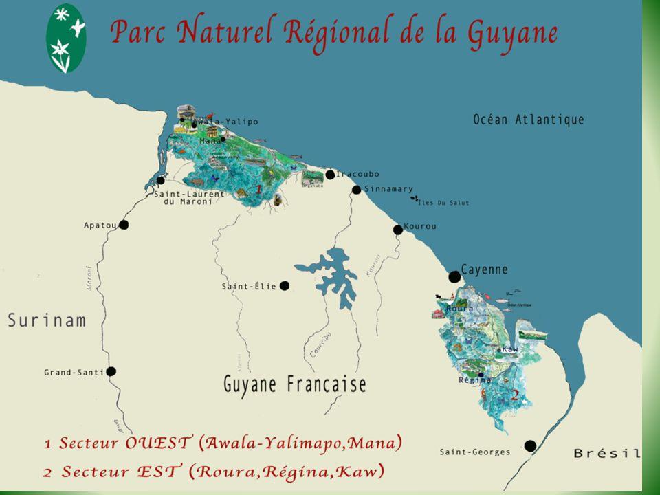 Exemples de projets : Écomusée de Régina, Réhabilitation de maisons traditionnelles (Roura), Réglementation de la chasse, Maison de lartisanat (Mana), Développement de lécotourisme, Projet « Oyana » (Oyapock Nature) : coopération avec le parc national de Cabo Orange (Amapá) dans les domaines environnementaux et culturels.