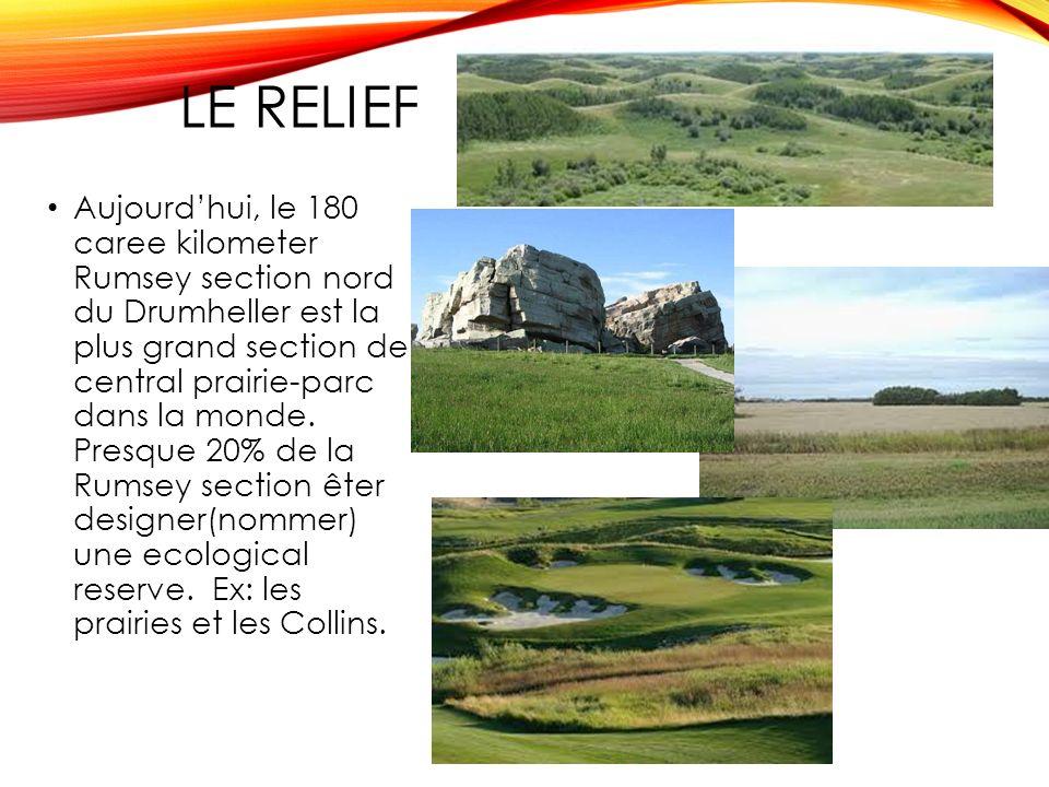 LE RELIEF Aujourdhui, le 180 caree kilometer Rumsey section nord du Drumheller est la plus grand section de central prairie-parc dans la monde.
